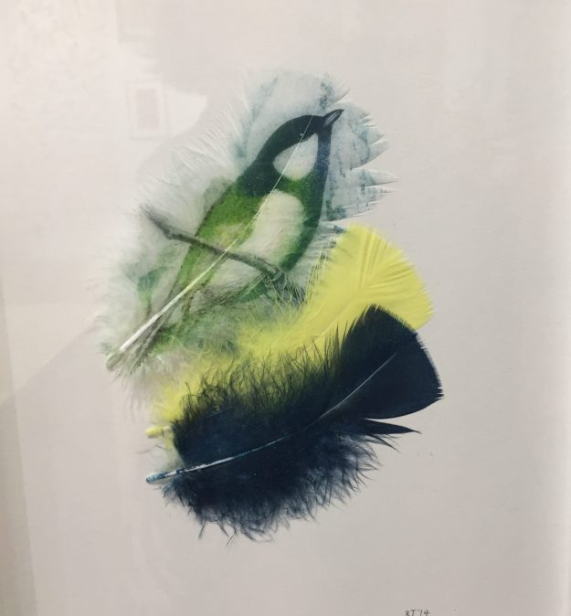 Great Tit, Rebecca Jewell
